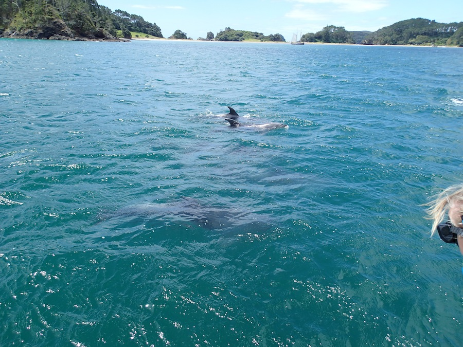 delfines bay of islands