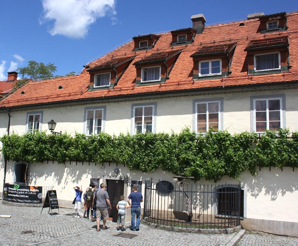 Old Vine House Maribor