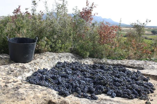 calado rupestre uvas rioja alavesa