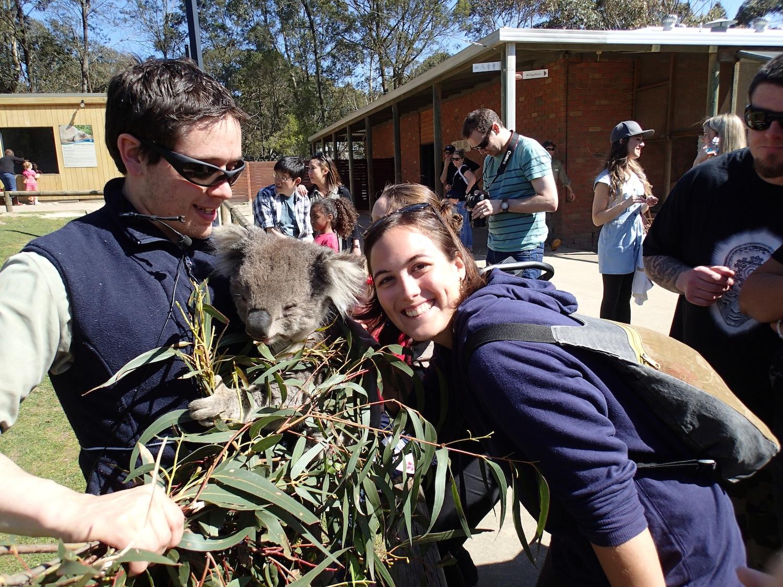 koalas en melbourne