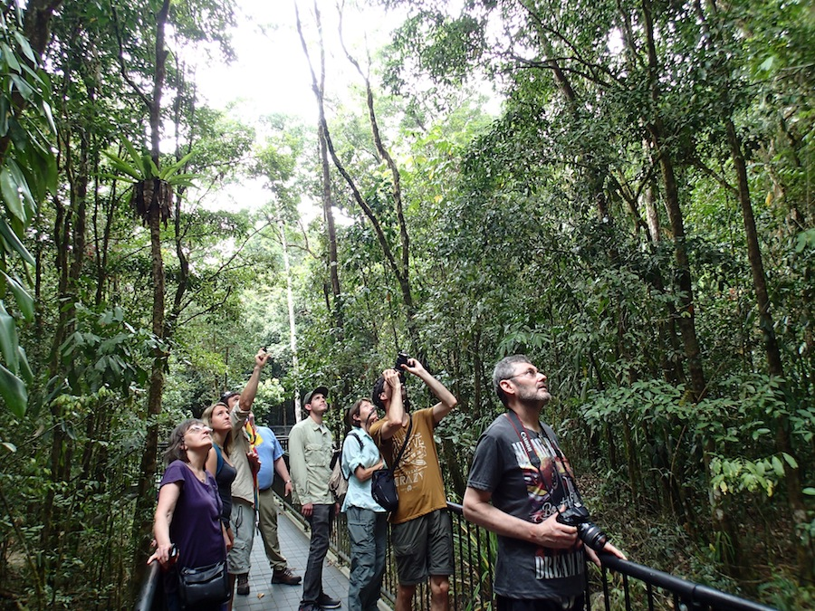Daintree forest wonder tours