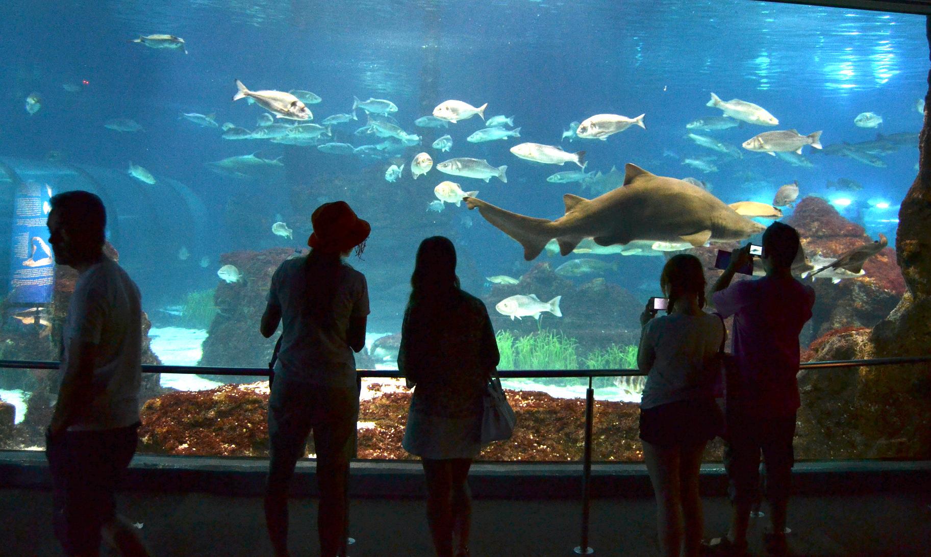 aquarium-emilio-j-rodriguez-posada